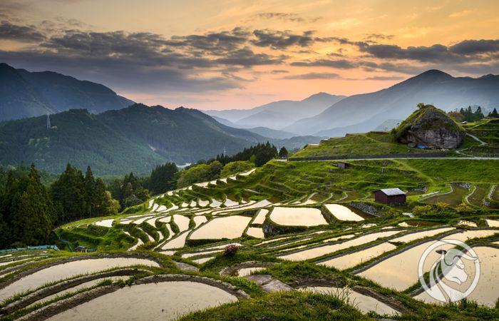 Rice Japan