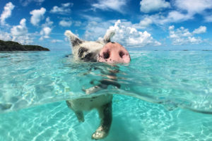 forex bahamas