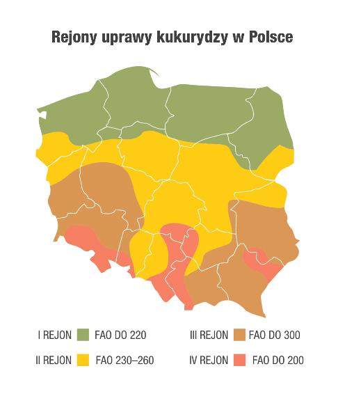 jak inwestować w kukurydzę polska