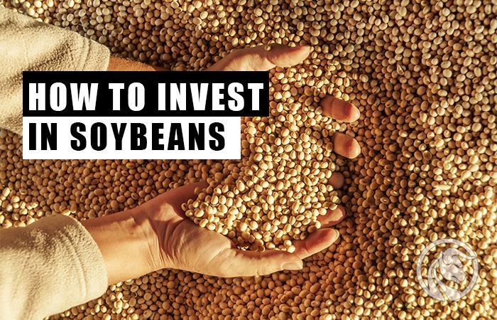 soja jak inwestować