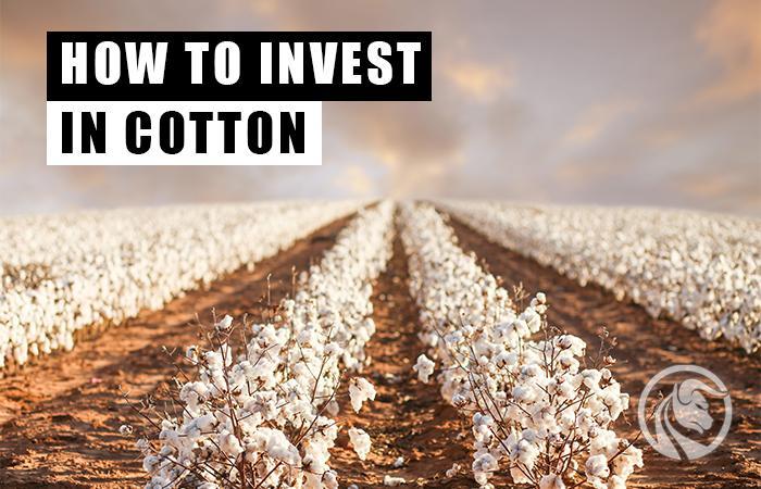 bawełna - jak inwestować w bawełnę