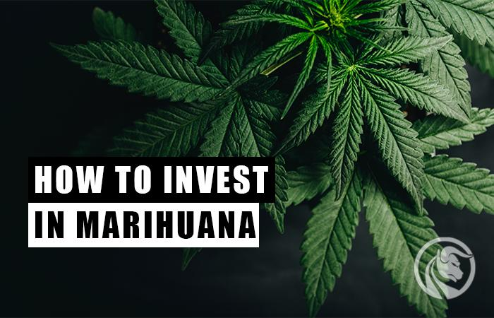 marihuana jak inwestować w rynek konopny