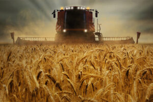 hossa na rynku zbóż
