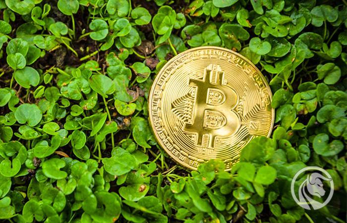 zielony bitcoin